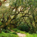 Floresta Relíquia e o Adernal