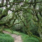 Trilho das Árvores Notáveis