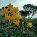 Narcissus - percurso pedestre