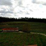 Quinta do Bosque