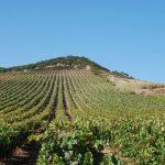 Rota do Vinho e da Vinha